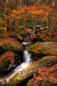 ~~Code Orange ~ autumn at Roaring Fork, Great Smoky Mountains National Park, Tennessee by Charlie Choc~~ Great Smoky Mountains, Blue Ridge Mountains, Parc National, National Parks, Chutes Victoria, Beautiful World, Beautiful Places, Smoky Mountain National Park, Smokey Mountain