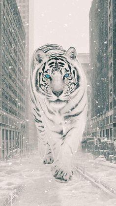 The White Tiger iPhone Wallpaper - iPhone Wallpapers Tiger Wallpaper, Animal Wallpaper, Big Cats Art, Cat Art, Best Wallpapers Android, Iphone Wallpapers, Tiger Spirit Animal, Animals Beautiful, Cute Animals