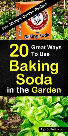 Find out how to best use baking soda in the garden and for your plants. Sprinkled over vegetables and plants, baking soda is a great natural remedy for pest control. Includes a variety of worm, gnats and ants repellent recipes. Natural Home Remedies, Natural Healing, Herbal Remedies, Natural Oil, Holistic Remedies, Natural Beauty, Gardening For Beginners, Gardening Tips, Kitchen Gardening