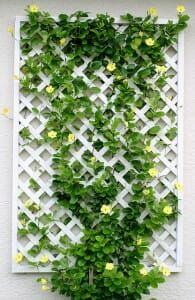 Maximise your growing space, minimize pest/disease problems, improve functionality + solve common problems like access with vertical garden structures. Lattice Garden, Lattice Wall, Garden Trellis, Lattice Fence, White Trellis, Rose Trellis, Vine Wall, Walled Garden, Flowering Vines