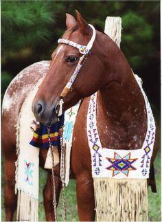 Horse in Native American ceremonial costume - By: Rita Nicholson