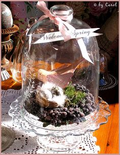 http://www.flickr.com/photos/boxwoodcottage/2318997031/  Welcome Spring bird under glass by Boxwoodcottage, via Flickr