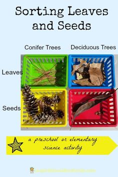 Sorting Leaves and Seeds - a preschool  or elementary science activity