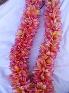 Double Rainbow Plumeria Lei - Fragrant