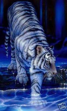Midnight Blue Tiger Cross Stitch Chart, Bn! (T005)