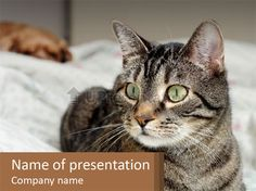 0000101699 PowerPoint Template