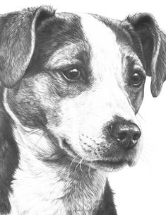 Jack Russell Terrier giclee print by Mike Sibley