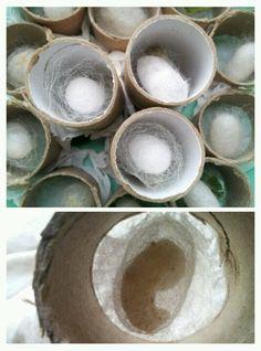 Silk worm cocoon