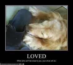 i adore you dog images - Google Search