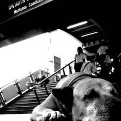 Dog, sleeping in National Stadium BTS Bangkok.
