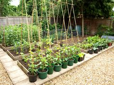 This is what I aspire my garden to look like next year.  (Source: Mark's Veg Plot - 10 June 2012)