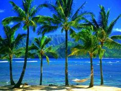 The Best Travel Deals Of The Season. If it is your vacation time then you can enjoy some of the best holiday deals of the season. You can enjoy the best Hawaiian holiday package or you can enjoy the tropical waters in Fiji. Some of the best holiday deals are discussed here. Hawaiian Holiday Package For Families. One of the best deals for a family holiday is the offer from Escape travel. You can enjoy seven nights in Honolulu with the best deal from this travel company. The ho