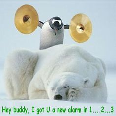 Get a Polar Bear funny picture from Animals. You can get dozens of other funny pictures from Animals. Here are some samples of funny words: polar, bear Funny Animal Photos, Funny Photos, Funny Animals, Animal Pics, Penguin Pictures, Funny Images, Animal Sayings, Humorous Pictures, Crazy Animals