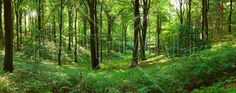 Panorama forest - Fototapeter & Tapeter - Photowall