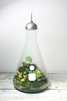 Awesome beaker terrarium, great idea for a window sill.
