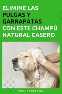 Eliminate fleas and ticks from your pet with a natural and homemade shampoo - Home remedies for fleas – Shampoo - Animals And Pets, Funny Animals, Cute Animals, I Love Dogs, Puppy Love, Schnauzer, Yorshire Terrier, Diy Shampoo, Homemade Shampoo