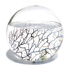 ecosphere: a no maintenance, self-contained ecosystem