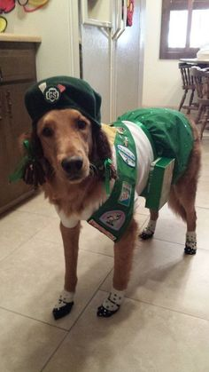 Clever dog Halloween costume ideas, like this Girl Scout pup! Try a DIY dog Halloween costume to guarantee you'll be the only one on the block.