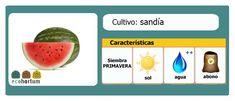 Cultiva sandías en tu huerto en casa y disfruta de un jugoso verano: http://ecohortum.com/como-cultivar-sandias/