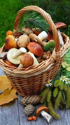 Fruit And Veg, Fruits And Vegetables, Photo Fruit, Autumn Scenery, Fall Scents, Autumn Aesthetic, Country Farm, Harvest, Stuffed Mushrooms