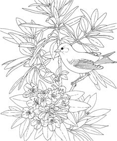Free Printable Coloring Page...Washington State Bird and Flower, Goldfinch, Rhododendron, educational printables