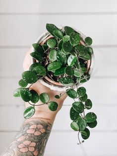 Summer Plants, Tropical Plants, Garden Plants Vegetable, Hoya Plants, Inside Garden, Plants Are Friends, Bedroom Plants, Outdoor Plants, Plant Care
