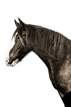 'Brumby' Photographic Print by Kara Rosenlund. Where horses run wild and free. © Kara Rosenlund Shop here: http://shop.kararosenlund.com/brumby-photographic-print/