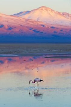Photographic Print: Flamingo, Pink Sunset above Atacama Desert by longtaildog : Chile Travel Honeymoon Backpack Backpacking Vacation South America Places To Travel, Places To See, Travel Destinations, Pink Sunset, Desert Sunset, Easter Island, Photos Voyages, South America Travel, Beautiful Landscapes