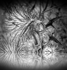 We steel our hearts to face the thorns.the darkest hour can illuminate the light within. The Darkest, Hearts, Steel, Face, Flowers, Photography, Photograph, Fotografie, The Face