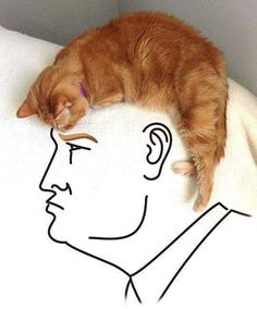 Take a look at this amazing Donald Trump Cat Hair Illusion? Browse and enjoy our huge collection of optical illusions and mind-bending images and videos. Funny Animal Videos, Funny Animal Pictures, Funny Animals, Funny Videos, Funniest Animals, Viral Videos, Donald Trump Hair, Amor Humor, Hair Illusion