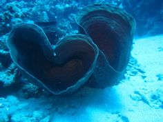 heart shapes in nature | heart shaped shell