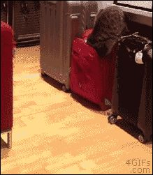 Quand mon chat...