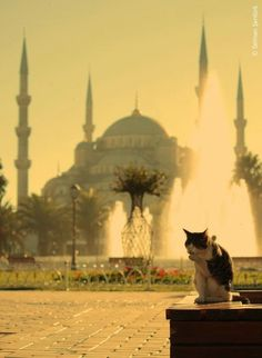 Discover eight amazing cat pictures taken against the backdrop of Istanbul, Turkey: http://www.traveling-cats.com/2015/02/cats-from-istanbul-turkey.html