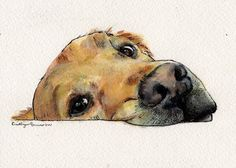 """Post with 975 views. """"Kyser"""" from Edible Chair Studio Watercolor Animals, Watercolor Paintings, Animal Drawings, Art Drawings, Dog Paintings, Dog Portraits, Dog Art, Art Sketches, Art Inspo"""