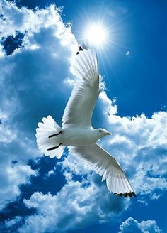 seagull - blue sky - amazing shot .....