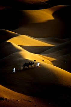 It's the treasures of desert beauty that is adored photographer by Adeeb Alani