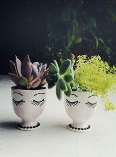 Succulent planters