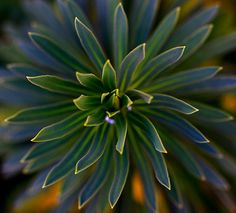 Patterns in nature (Explored) by amazon2008, via Flickr