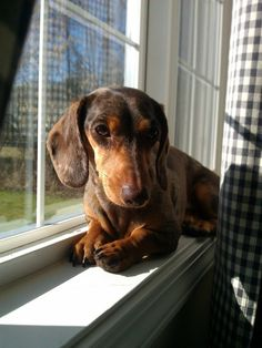 everyone meet GRETEL! Check out her and her brother, CHESTER, family's adventure blog at www.youdidwhatwithyourweiner.com