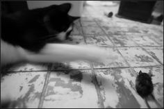 Facebook, Cats, Photography, Animals, Gatos, Photograph, Kitty Cats, Animaux, Photography Business