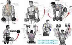 Dumbbell Exercises For Shoulders Gym Workout ChartGym