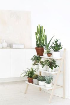 Fun way to display in-home plants.