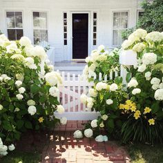 """""""Hydrangeas overload! Is there anything better?"""""""
