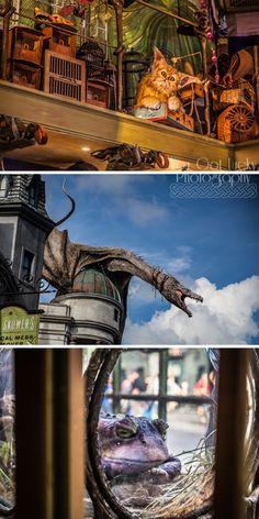 Universal Studios, FL, Diagon Alley, Magical Creatures | You Got Lucky Photography | Travel Photography