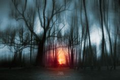 Moody spooky forest at sunset by Dariusz Łakomy on 500px
