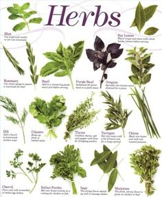 Herbal Medicine for Anxiety I need to start using more of this
