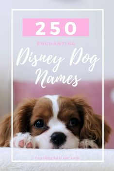 As a kid, there was nothing I loved more than the magic of Disney. I had it all – the Disney movies, the Disney dresses, the Disney games, and even pets named… Good Pet Names, Cute Names For Puppies, Big Dog Names, Little Dog Names, Corgi Names, Cute Husky Puppies, Cute Little Dogs, Dog Names Disney, Disney Princess Names