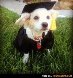 Disfraces perrunos: Graduado