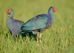 türkiyedeki kuş türleri resimli - Google'da Ara