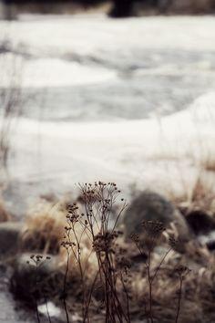 winter beauty /CAISA K